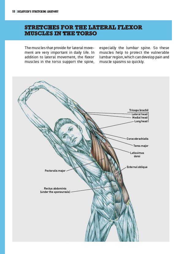 Stretches for the flexor muscles
