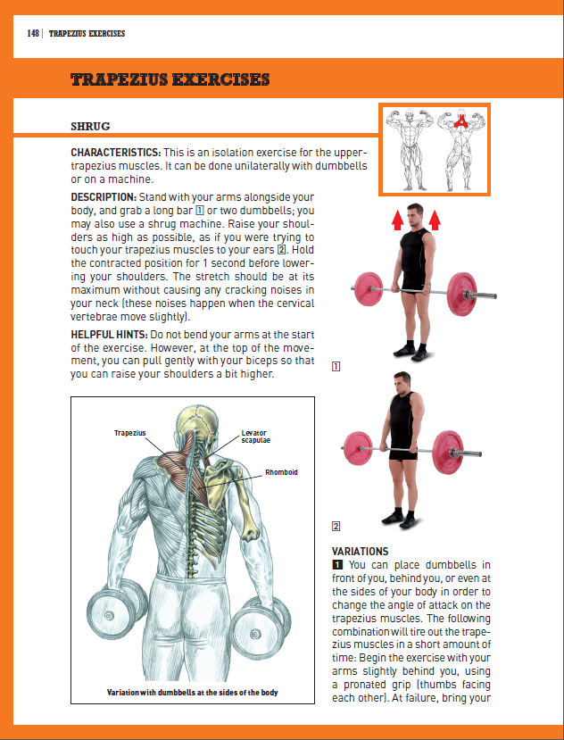 Trapezius Exercises - Shrug