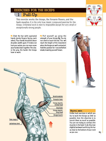 Pull-Up exercise