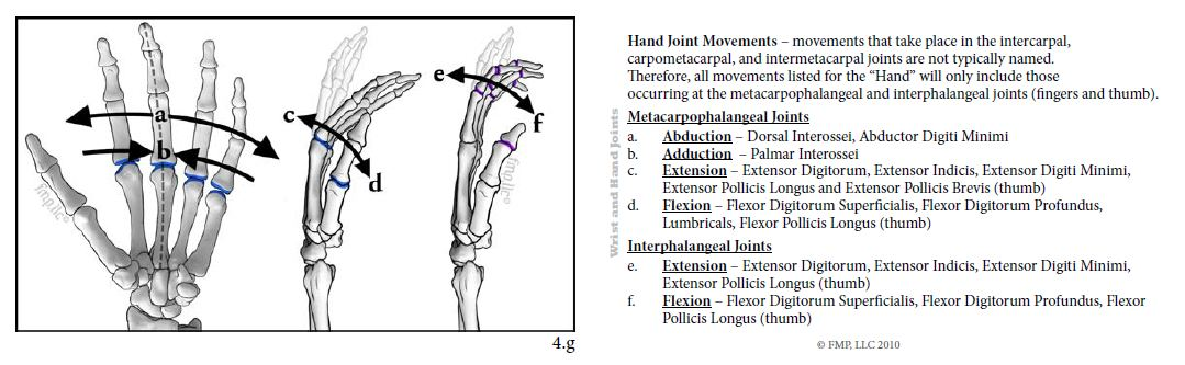 Hand Joint Movements - Front and Back of Card